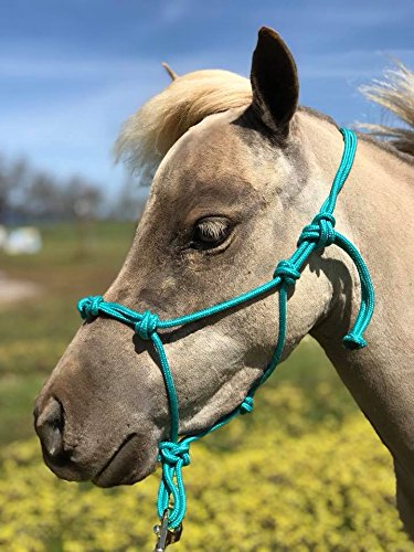Star Miniature Horse 4 Knotted Training Rope Halter (Teal, Large 38-42 (Knotted Training Halter)