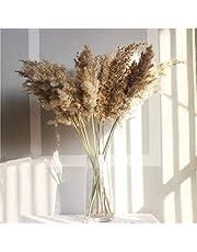 10 Pcs Real Dried Pampas Grass Decor Wedding Flower Bunch Natural Plants Decor Grass (Color : 10 pcs raw Color, Size : M)