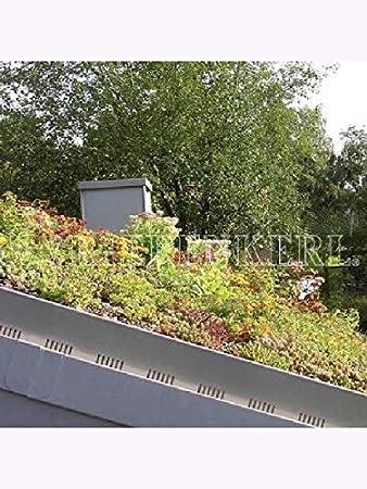 Mauerpfeffer Essbar sedum sprossen gemisch zur begrünung dachflächen dachbegrünung