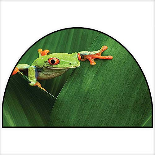 Non Skid Small Accent Throw Rugs Cute Red Eyed Frog Between Exotic Macro Big Leaves Wild Nature Night Animal Vivid Colors Image Green Keeps Your Floors Clean W31 x H20 INCH