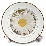 3dRose cp_29343_1 Daisy Wood Design Flowers-Porcelain Plate, 8-Inch