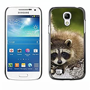 Hot Style Cell Phone PC Hard Case Cover // M00000438 Raccoons Animals Pattern // Samsung Galaxy S4 Mini I9190