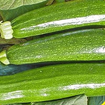 Everwilde Farms - Dark Green Zucchini Summer Squash Seeds - Gold Vault