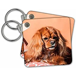 Danita Delimont - Dogs - Cavalier King Charles Spaniel on pillow - Key Chains - set of 4 Key Chains (kc_258145_2)