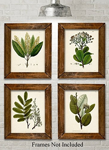 Green Botanical Art Prints - Set of Four Prints (8x10) Unframed - Great Kitchen Decor and Gift for Nature Lovers