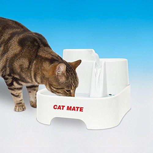 cat sliding into box