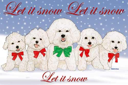Bichon Frise Christmas Cards : 10 Holiday Cards with Red Envelopes - ADORABLE!