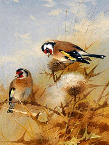 "BULLFINCHES by Archibald Thorburn birds sky grass seeds bur Accent Tile Mural Kitchen Bathroom Wall Backsplash Behind Stove Range Sink Splashback One Tile 6""x8"" Ceramic, Matte"