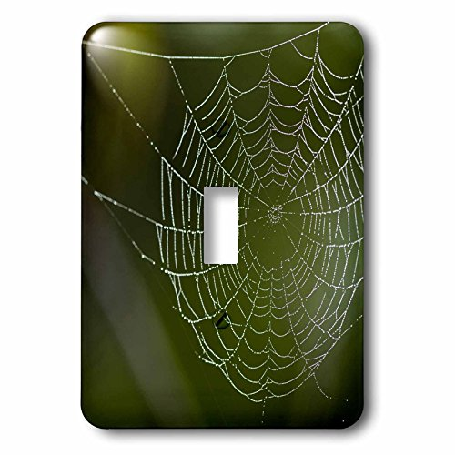 3dRose Danita Delimont - Spiders - Dew hangs on a spider web, Bradenton, Florida - Light Switch Covers - single toggle switch - Bradenton Outlets