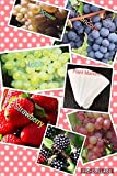 buy Bulk 4 Grape Vine Seeds Survival Seeds 440 Seeds Upc 650327337435 + 6 Plant Markers Strawberry Seeds Blackberry Seeds (PLUS BONUS 2PACK) now, new 2018-2017 bestseller, review and Photo, best price $6.39