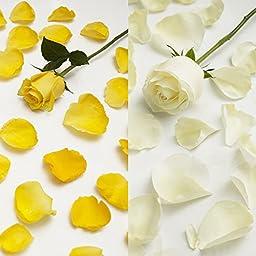 Farm Fresh Natural White - Yellow Rose Petals - 5000 petals