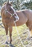 Intrepid International Horse Lunge Line Rope