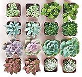 Shop Succulents | Assorted Live Plants, Hand