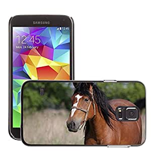 GoGoMobile Slim Protector Hard Shell Cover Case // M00117810 Horse Mare Animal Nature Field // Samsung Galaxy S5 S V SV i9600 (Not Fits S5 ACTIVE)