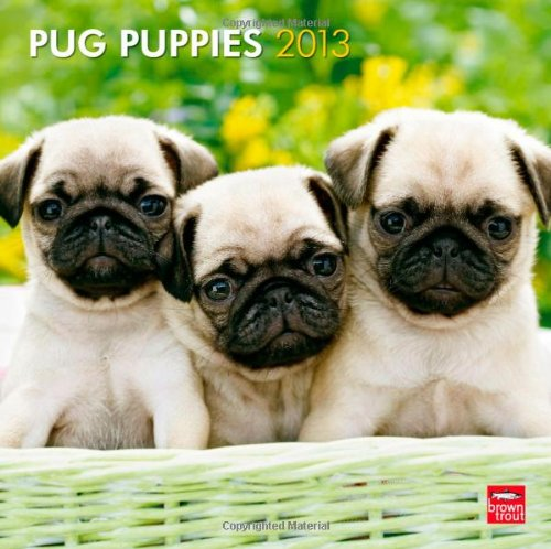 Pug Puppies 2013 - Mopswelpen - Original BrownTrout-Kalender