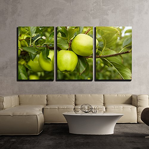 wall26 - 3 Piece Canvas Wall Art - Green Apples in The Orchard - Modern Home Decor Stretched and Framed Ready to Hang - 24