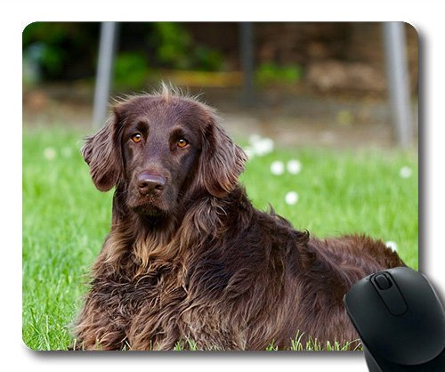 Dogs Puppies Pets Mouse Pads,Dog Animal Pet German Longhaired Pointer View Eyes,Dogs Mouse mat