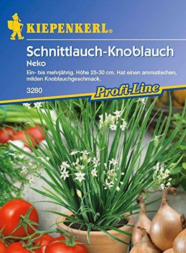 Allium Schnittknoblauch Samen Schnittlauch mit Knoblauchgeschmack