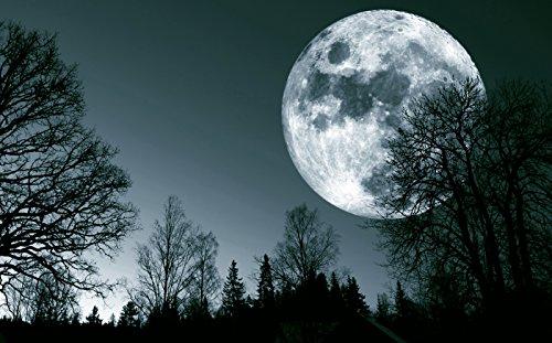 Moon Shadow- 24