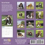 2020 Basset Hounds Wall Calendar by Bright Day, 16 Month 12 x 12 Inch, Cute Dogs Puppy Animals Hunting Canine 5