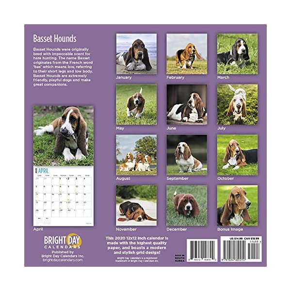 2020 Basset Hounds Wall Calendar by Bright Day, 16 Month 12 x 12 Inch, Cute Dogs Puppy Animals Hunting Canine 2
