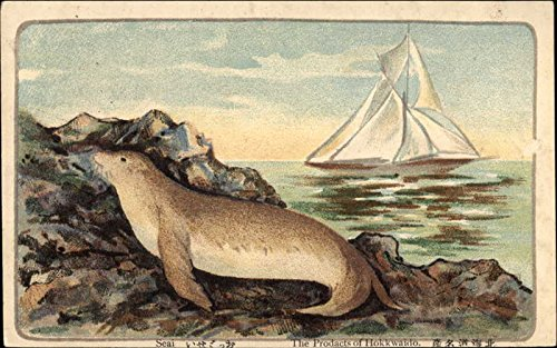 Seal on the Rocks beside the Ocean Other Animals Original Vintage Postcard from CardCow Vintage Postcards