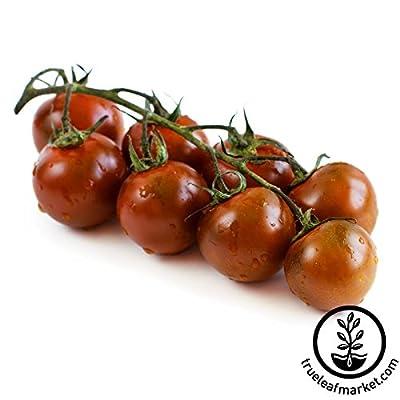 Tomato Garden Seeds - Chocolate Cherry - 500 Seeds - Non-GMO, Vegetable Gardening Seed