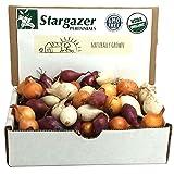 green onion bulbs - Stargazer Perennials Mixed Red, White and Yellow Onion Sets 1 pound | Organic Non-GMO Bulbs - Easy To Grow Onion Assortment