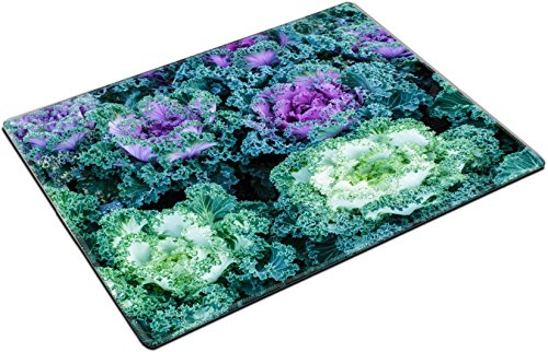 MSD Place Mat Non-Slip Natural Rubber Desk Pads design: 37628652 Beautiful ornamental cabbage in garden (Garden Beautiful Ornamental)