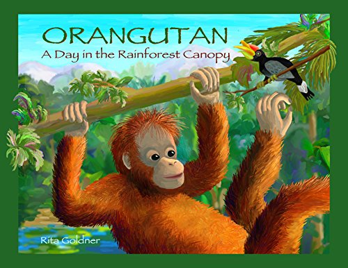 Orangutan: A Day in the Rainforest Canopy by [Goldner, Rita]