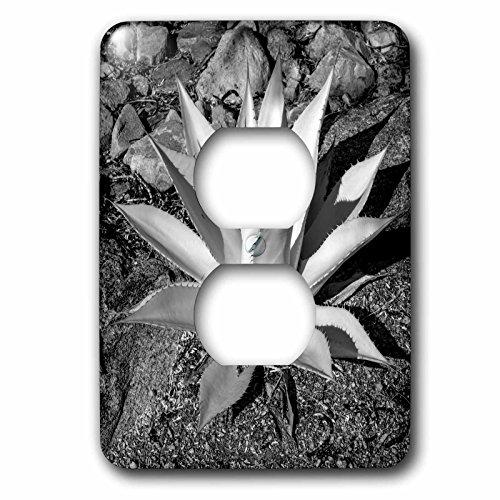 Danita Delimont - Plant - USA, Arizona, Scottsdale, Mayo Clinic Campus - Light Switch Covers - 2 plug outlet cover - Outlet Arizona Scottsdale