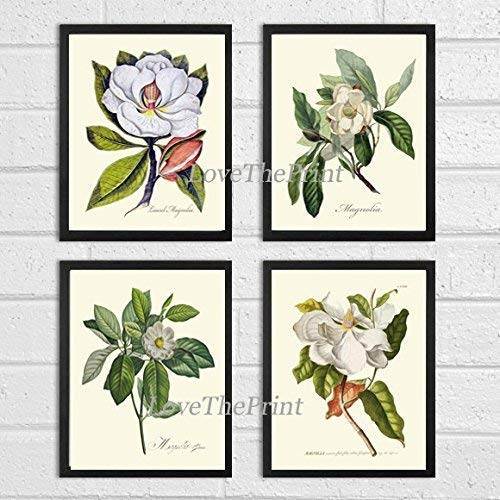 Magnolia Flower Print Set of 4 Prints Antique Beautiful White Flowers Blooming Tree Spring Summer Nature Home Room Decor Wall Art Unframed