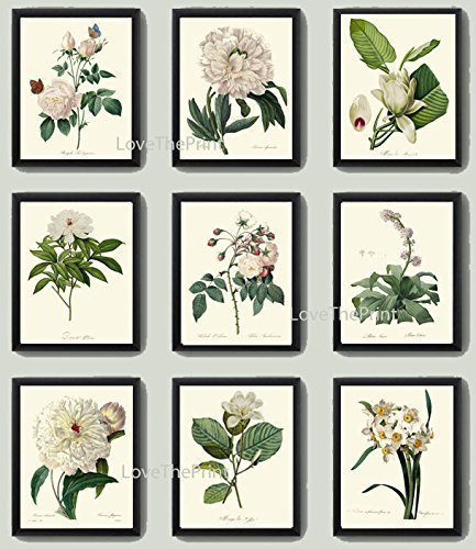 Botanical Print Set of 9 Antique Beautiful Redoute White Flowers Rose Peony Magnolia Narcissus Butterfly Large Garden Nature Plant Home Room Decor Wall Art Unframed