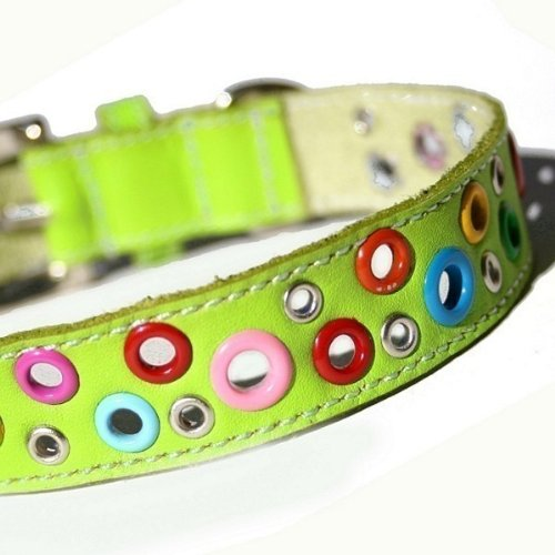Loki Leather Puppy (The Cool Puppy Loki Puppy Leather Dog Collar - Key Lime Green Large (12-14 inches))