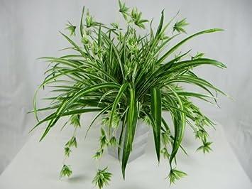 office pot plants. 50cm potted artificial silk giant spider plant chlorophytum comosum office in a pot plants