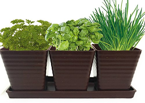 Grow 5 Herbs with Burpee's Herb Garden Starter Kit - Parsley, Cilantro, Chives, Basil and Oregano. Complete Kit with Everything Needed to Grow Culinary Plants Indoors. (Brown) by Burpee