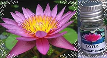 Amazoncom Lotus Flower Scent Thai Spa Aroma Pure Essential