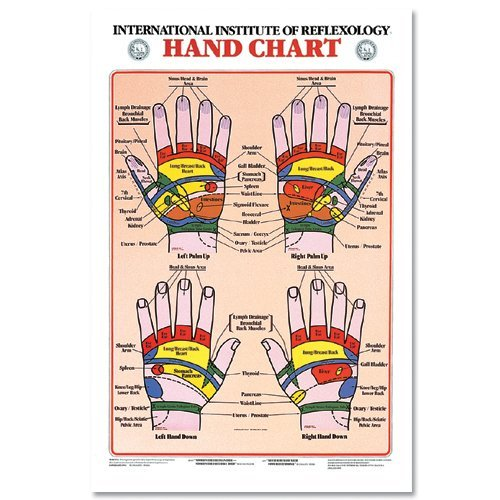 - Pocket Hand Reflexology Chart Laminated 8.5 x 11