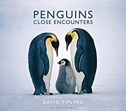 Amazon penguins close encounters ebook david tipling penguins close encounters by tipling david fandeluxe Document
