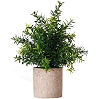 Artificial Potted Plant Rosemary Greenery in Pot Small Houseplant for Indoor Greenery Tabletop Décor Centerpiece