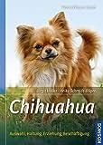 Chihuahua: Auswahl, Haltung, Erziehung, Beschäftigung