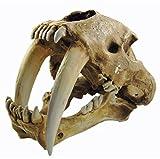 Gmasking Resin Smilodon Sabertooth Tiger 1:1 Skull Replica