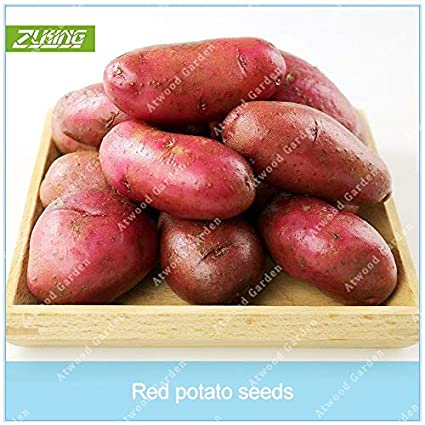 Garden Supplies Learned Zlking 100pcs Very Rare Red Skin Meat Potato Ruby Potatoes Bonsai Red Rose Potatoes Vegetable Cooking Food Garden Plant