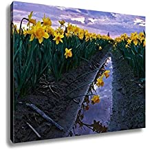 Ashley Canvas, Daffodils Fild At Sunset And Reflection In Water Scagit Valley Tulip And, 24x30, AG6540493