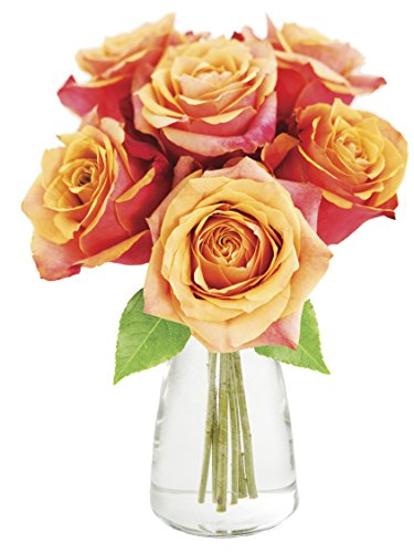 KaBloom Bouquet of 6 Fresh Cut Orange Roses (Long Stemmed)