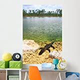Wallmonkeys Florida Everglades American Alligator Wall Mural Peel and Stick Graphic (72 in H x 48 in W) WM360627