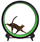 One Fast Cat Exercise Wheel - Green