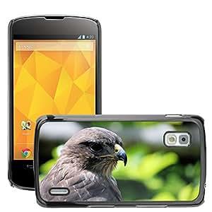 Super Stella Slim PC Hard Case Cover Skin Armor Shell Protection // M00145261 Common Buzzard Buteo Buteo // LG Nexus 4 E960