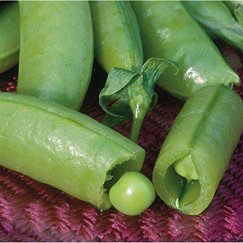 David's Garden Seeds Pea Super Sugar Snap RSL8264 (Green) 100 Open Pollinated ()