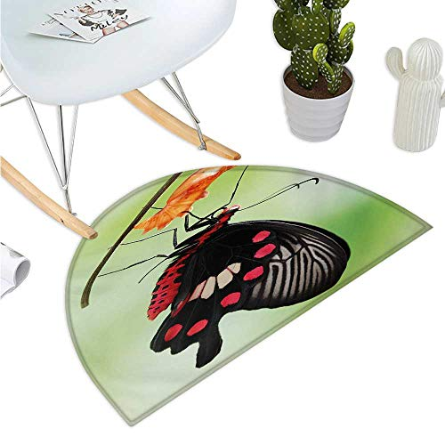 (Swallowtail Butterfly Half Round Door mats Amazing Moment Coming Out of Cocoon Chrysalis Transformation Entry Door Mat H 47.2